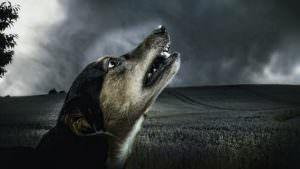 7 All-Natural Ingredients To Help Calm Your Dog During a Thunderstorm