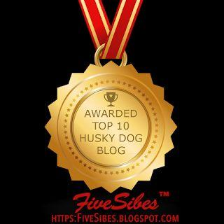 "Newsy Tuesday: Our Blog is a Top 10 Husky Dog Blog on ""the Planet!"""