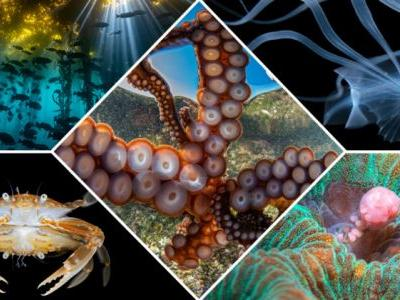 Glimpse into Another World Through the Top Underwater Photos of 2020