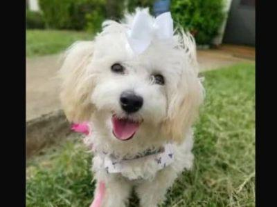 Puppy hit by car, killed after escaping doggie day care, family says