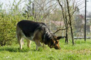 5 Reasons Dogs Eat Grass