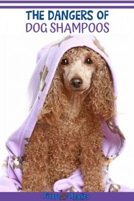 The Dangers of Dog Shampoos