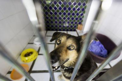 Is There Really a Shortage of Adoptable Dogs?
