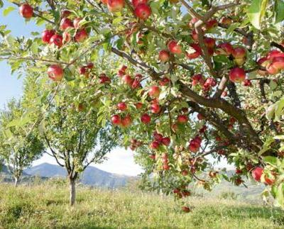 This New Zealand couple are on a mission to save heritage apple trees PLUS the best apples by New Zealand region