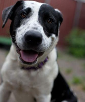 """""""ASTRO"""" good hearted Mutt"""