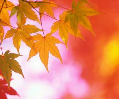 Best Places to View the Fall Colors
