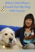 What I Did When I Found Out My Dog Bocker Had Cancer