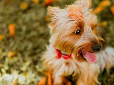 21 Fall Dog Dangers To Avoid This Autumn