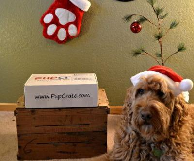 PupCrate December 2015 Edition