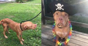Loveable Pitbull Made Amazing Recovery With Help From You And GreaterGood