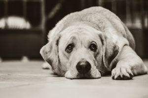 Fact or Fiction? Lifesaving Information About Heartworm And Your Dog