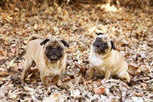 How to Deal with Your Dog's Autumn Allergies