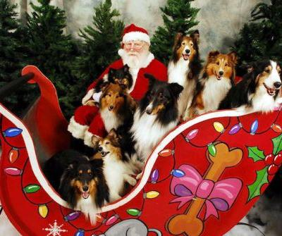 Here's Where to Get Pictures of Your Dog with Santa