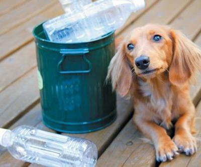 7 Ways to Go Eco Friendly With Your Dog