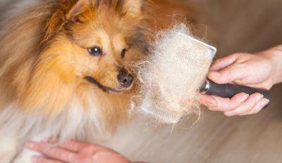 Safest And Quickest Way To Untangle Matted Dog Hair