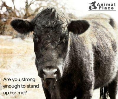 Veganism is strength. Speaking out about the atrocities that