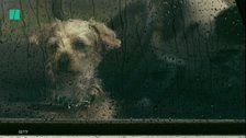 How To Keep Pets Safe During A Hurricane
