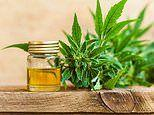 Watchdogs plan ban on popular CBD 'cannabis' oil despite experts claiming it eases anxiety