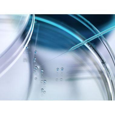 FDA Steps Up Enforcement on Unproven Stem Cell Therapies