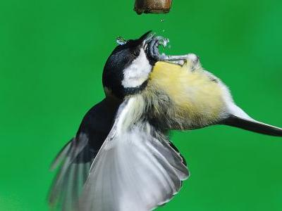 Flying Under The Influence: Drunk Birds Causing Chaos In Minnesota