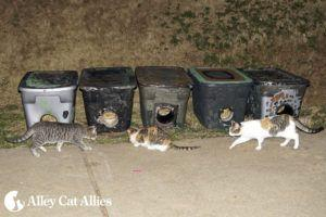 Alley Cat Allies, Local Girl Scouts Protect Cats With Shelters