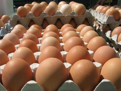 World's first kill-free chicken eggs are now available