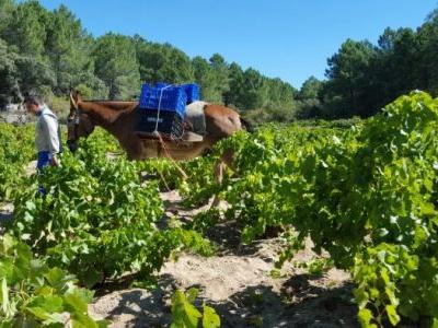 Innovation With Altitude: Spain's New Generation of Winemakers