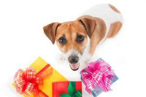 Best Gift Ideas for Small Dogs and Their Owners