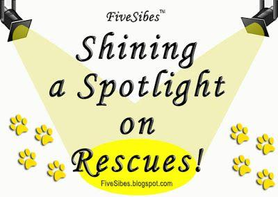 WaitingWednesday Spotlight: Northern Lights Sled Dog Rescue