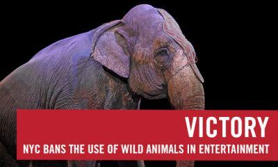 Victory in NYC: No more animal exploitation in the circus