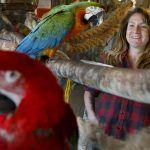 If you're thinking about getting a parrot, read this first