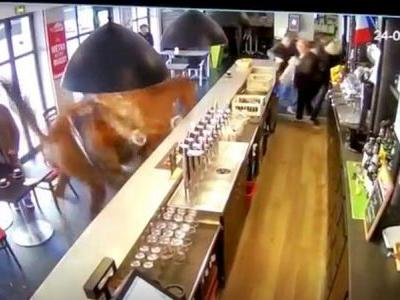 A horse walks into a bar: Cafe-goers stunned as horse races through