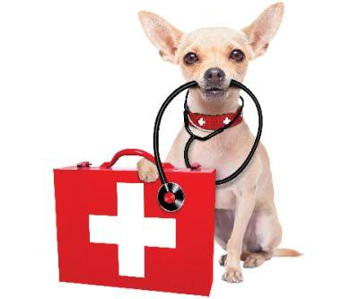 When to Take a Dog to the Vet, ASAP