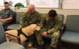 Intuitive Stress Dog Helps Naval Base Battle Suicide Statistics