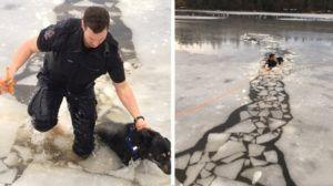 Police Officer Dives Into Frozen Lake To Save Stranded Dog
