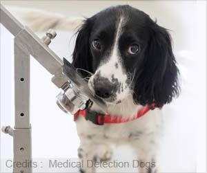 Sniffer Dogs can Detect Malaria