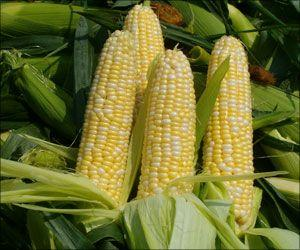 Corn Production is a Major Contributor to Air Pollution: Study