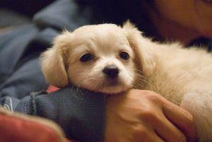 8 Things Your Puppy Wishes You Wouldn't Do