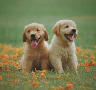 Must Haves for Your New Dog | Winslow Animal Hospital Dog & Cat