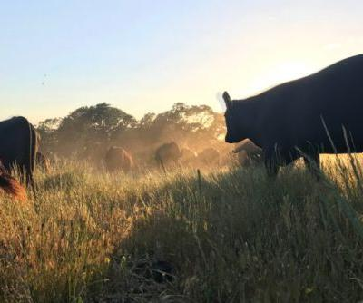 'Eat Less Meat' Ignores the Role of Animals in the Ecosystem