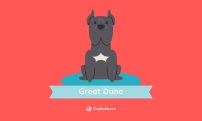 Woofpaper: Great Dane