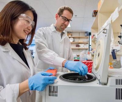 Mouse Study Yields Long-Awaited Insights into Human Stomach Cancer