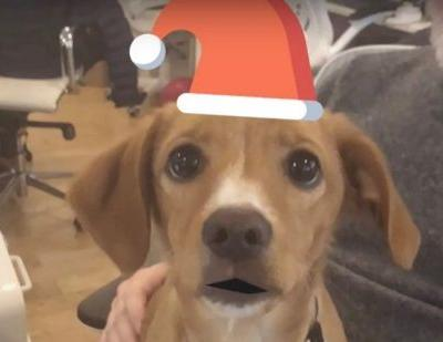 This App Lets You Send Cards Starring Your Dog Because No One Wants a Holiday Card of Just You