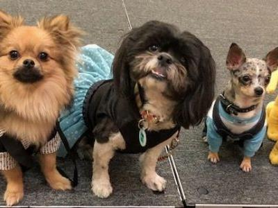See why we had such a great time at Dog Lovers Days