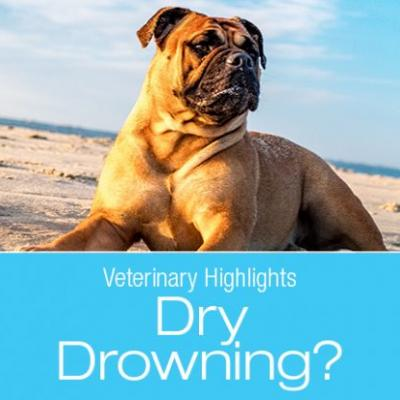 "Veterinary Highlights: Have You Even Heard About ""Dry Drowning?"""