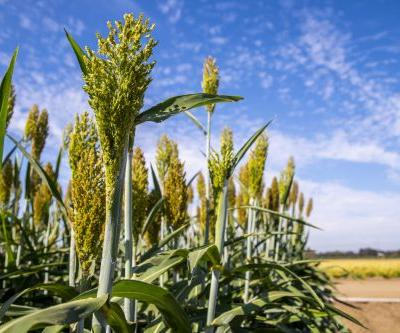 Scientists Find a Molecular Switch for Better Biofuels