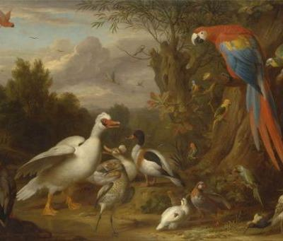 Quick History of Avian Classification