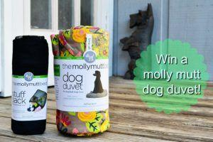 Spring Cleaning with molly mutt Dog Duvets! Giveaway