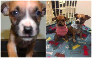 Thanks To The Community, Puppy Stolen From The Shelter Is Found, Safe & Sound