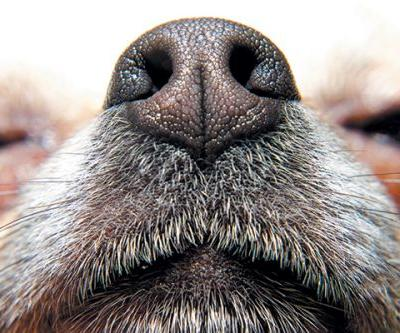 7 Amazing Facts About Your Dog's Sense of Smell